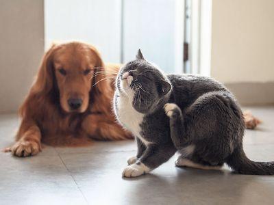 lentekriebels bij je huisdier